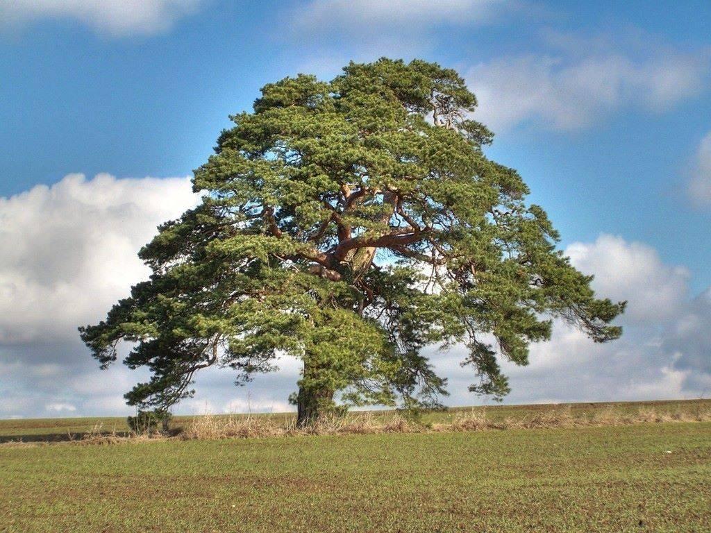 SVĚT PODLE PROTHA (4.): Zabij bobra, zachráníš strom, zabij aktivistu, zachráníš les