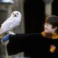 Harry Potter očaruje O2 arenu v doprovodu Českého národního symfonického orchestru