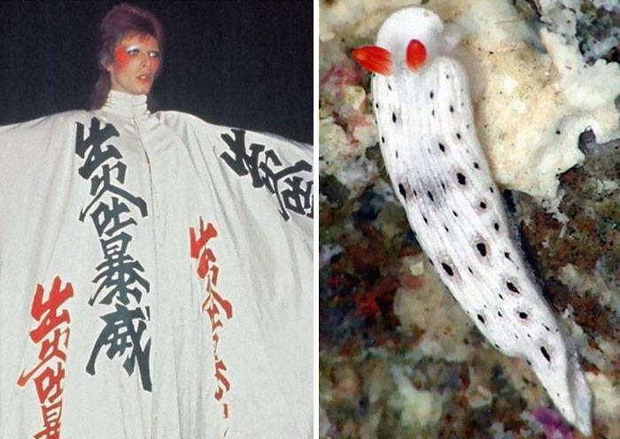 Okopíroval David Bowie image mořských potvor? Prohlédněte si fascinující galerii