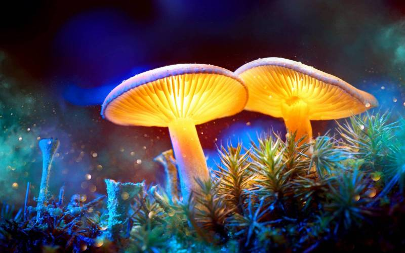 Rostou! TOP 10 písní o houbách a houbičkách. Tool, Nickelback, George Harrison a další houbaři