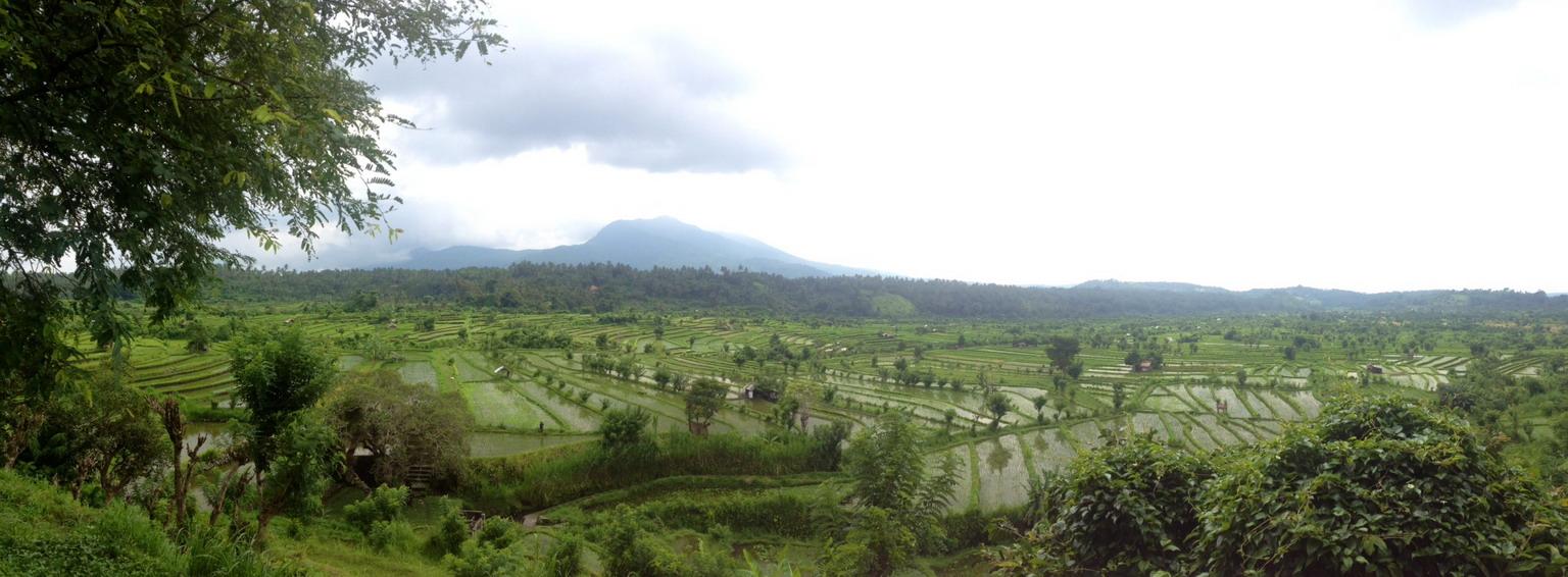 Rýžová pole nad Amlapurou resize