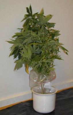 Drogová poradna: Drogy vs. zákon