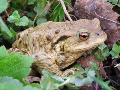 Drogová poradna: … mokrý žáby